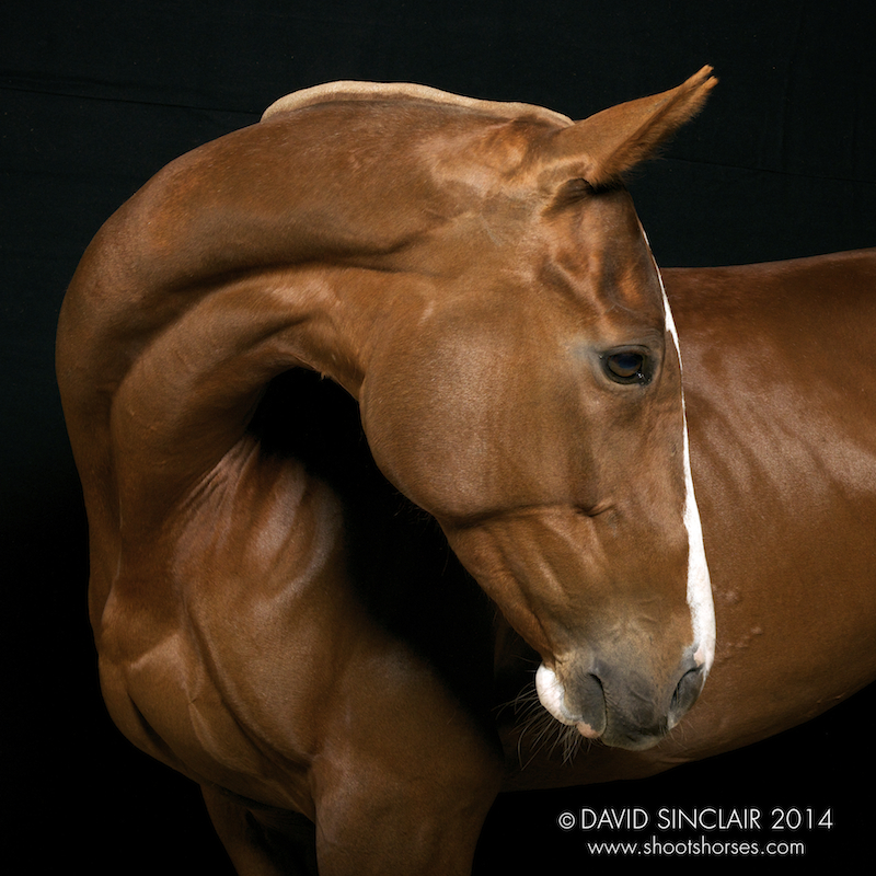 Polo_Ponies_in_theStudio_D802389